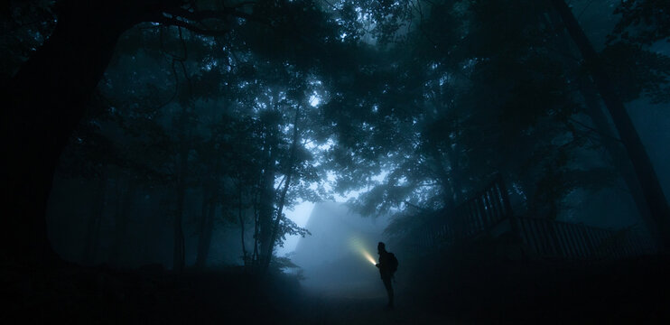 Side view of anonymous male trekker silhouette on pathway illuminating night woods with flashlight