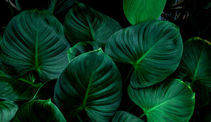 Wall Mural - Full Frame of Green Leaves Texture Background. tropical leaf