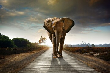 elephant walking in the park