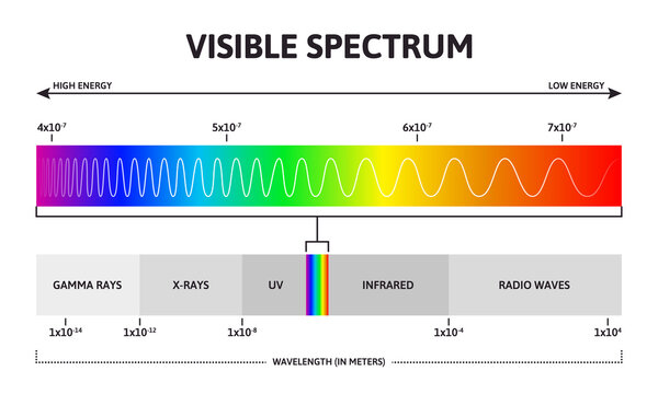 Visible color spectrum. Sunlight wavelength and increasing frequency vector infographic illustration. Visible spectrum color range. Rainbow electromagnetic waves. Educational physics line