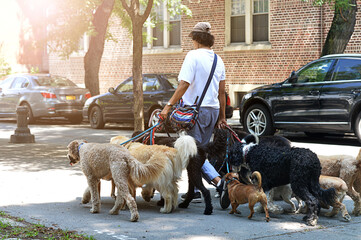 a young man with dogs in the street