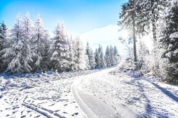 Fototapeta zima las góry śnieg