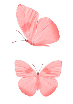 set of red butterflies isolated on a white background