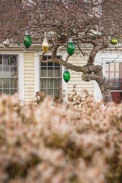 USA, Massachusetts, Cape Cod, Provincetown. Christmas decorations on tree.