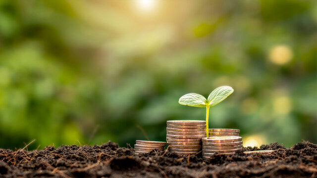 A seedling growing on a pile of coins has a natural backdrop, blurry green, money-saving ideas and economic growth.