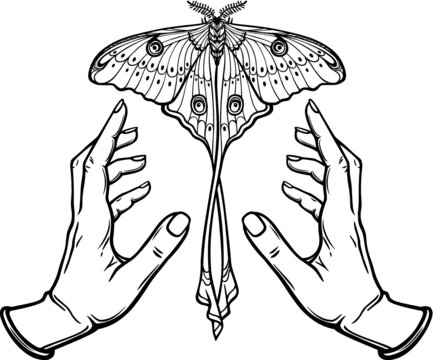Human hands hold a butterfly having a tail. Coloring book. Vector illustration isolated on a white background.