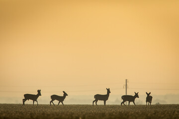 Deers in a green field with forest in background, beautiful wildlife