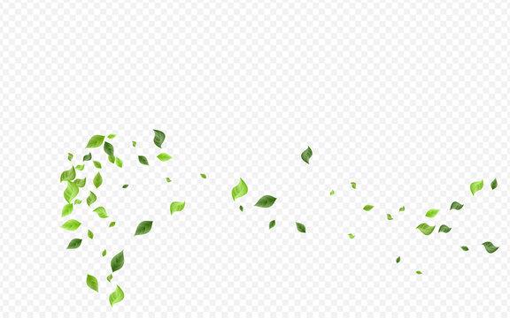 Grassy Leaf Herbal Vector Transparent Background