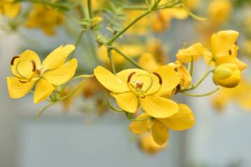 Fototapeta żółte storczyki obraz