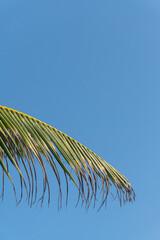 Liście palmy na tle niebieskiego nieba, piękne naturalne tło, tekstura.