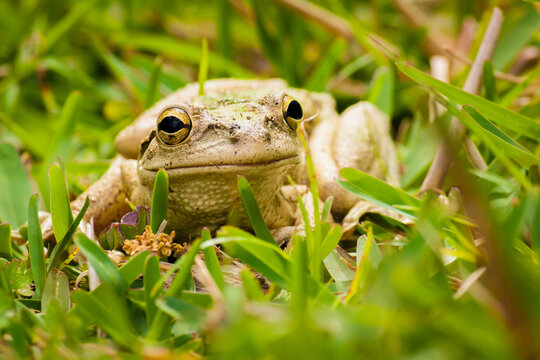 Closeup of a frog in our backyard.