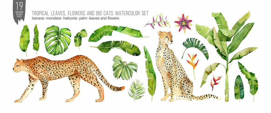 Watercolor cats, tropical leaves and flowers set. Colorfull set for design textile, wallpapers, prints and banners.