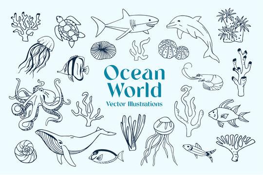 Vector illustrations of various Marine animals
