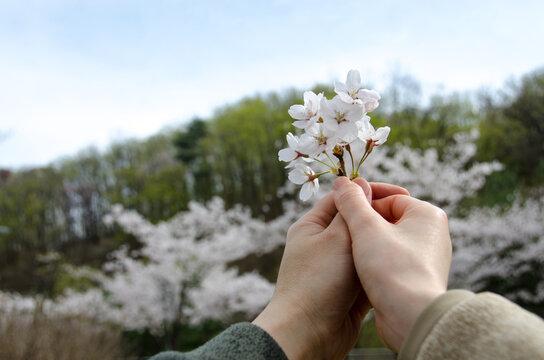벚꽃과 커플