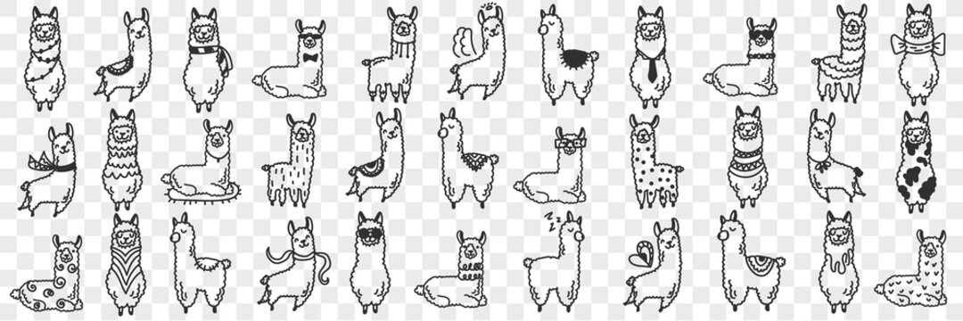 Funny alpacas animals doodle set. Collection of hand drawn various funny cute alpaca animals in different poses enjoying life isolated on transparent background