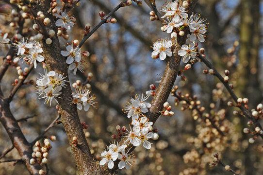 Primavera a Basiglio,  Parco agricolo Sud Milano