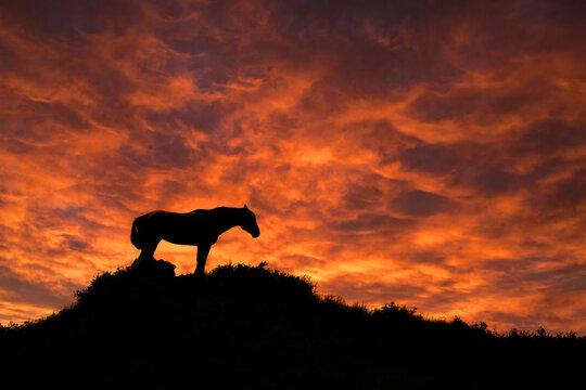 Wild Horse, Sunset, Theodore Roosevelt National Park, North Dakota, USA
