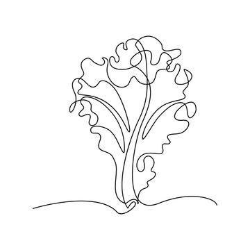 Lettuce in continuous line art drawing style. Fresh lettuce leaf with ruffled edges minimalist black linear design isolated on white background. Vector illustration