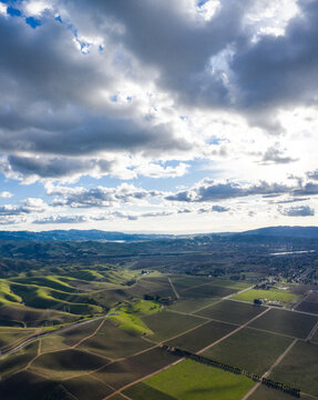 Sunlight passes through low clouds and illuminates a vineyard in Livermore, California. Some of the world's best vineyards exist in Alameda, Napa, and Sonoma counties.
