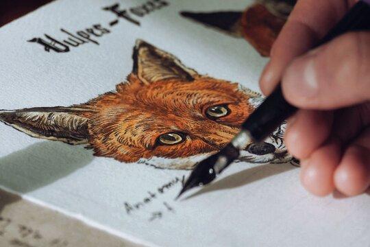 Fox anatomy study vol. 2