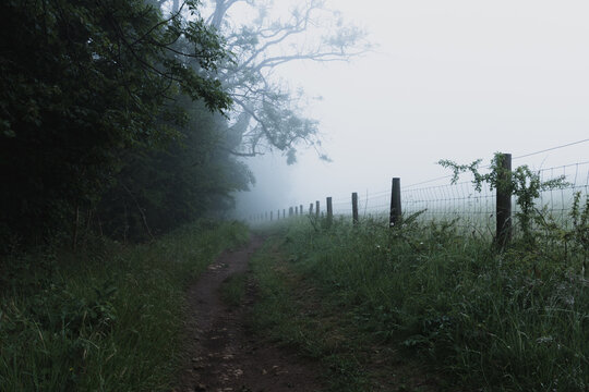 A track next to a line of trees, in the countryside. On a moody foggy day.