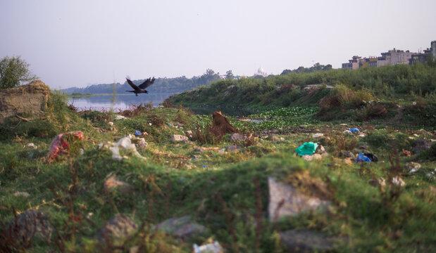 Bird and trash