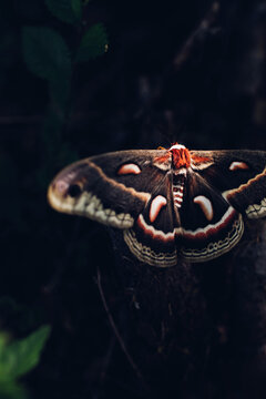 Giant Moth In Spot of Light