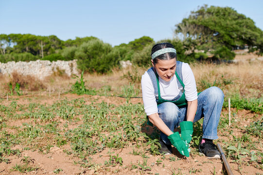 Woman removing weeds from her vegetable garden