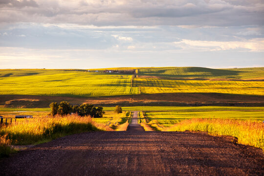The green farmland of Alberta at sunset.