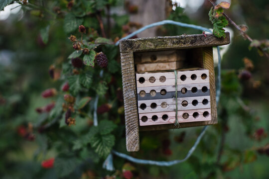 Tayberries and bee box