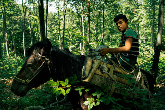 A kid transporting trees by horse for the logging industry
