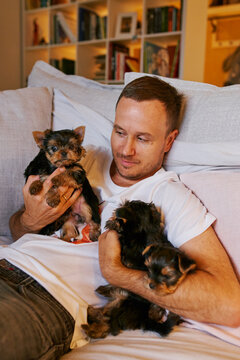 a man shows his Yorkshire Terrier puppies on a sofa in a living room home