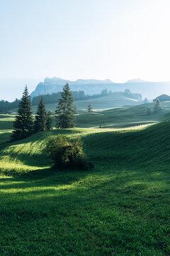 Beautiful meadow at sunrise