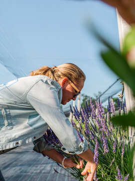 Woman cutting flowers in greenhouse