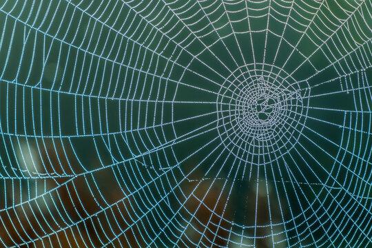spiderweb in the garden