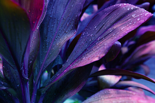 water drops on the leaf, blue and purple floral background