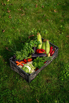 autumn harvest, large basket of vegetables