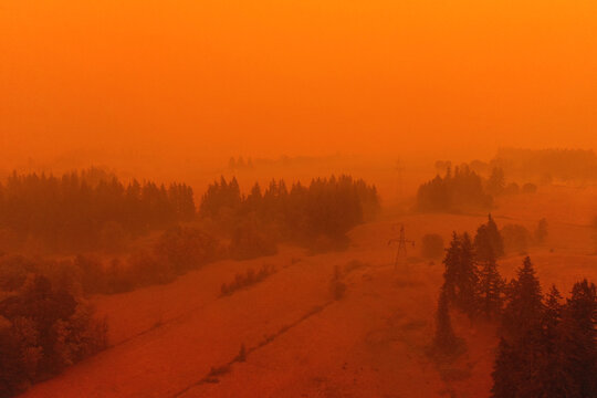 Dark forest with smoke and red light during wildfire