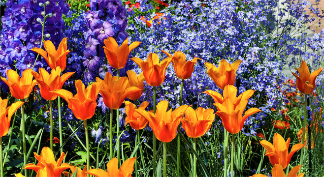 Tulip garden, Longwood Gardens, Pennsylvania