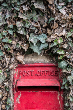 Old red mailbox among dry creeper