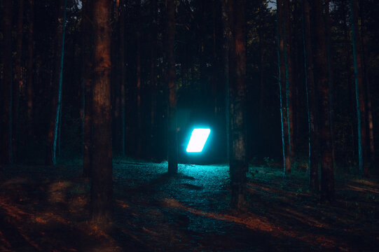 Mysterious light illuminating the forest