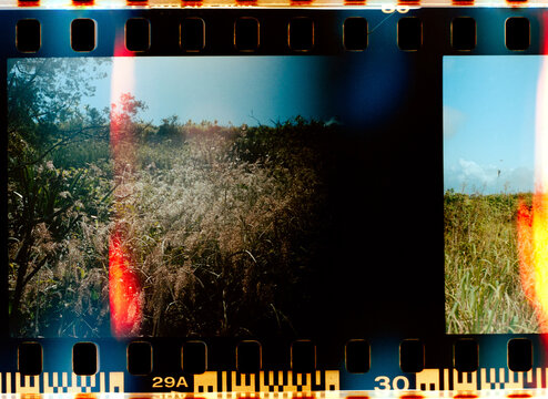 Abstract film scan of grass in Maui, Hawaii