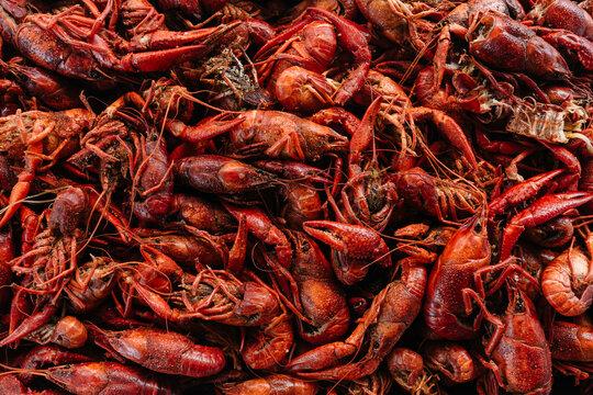 Crawfish / Crayfish