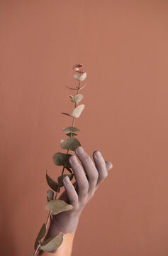 Painted hand holding an eucalyptus branch
