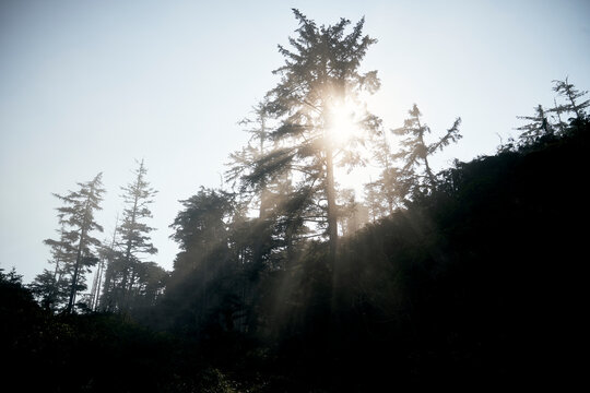 Light streams through trees on shore in the Pacific Northwest.