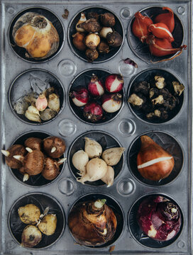 A huge variety of spring flowering bulbs gathered together on an old enamel baking tray