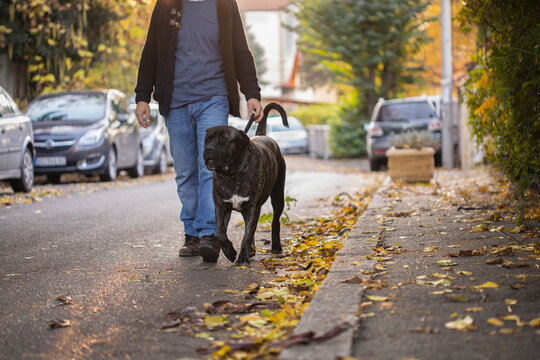 A man crosses the street with his pet dog on a leash