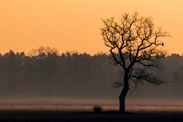 Obraz misty morning in the forest - fototapety do salonu