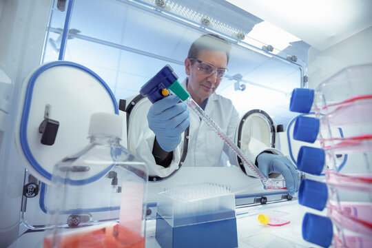 Scientist pipetting liquid in an anaerobic cabinet in laboratory