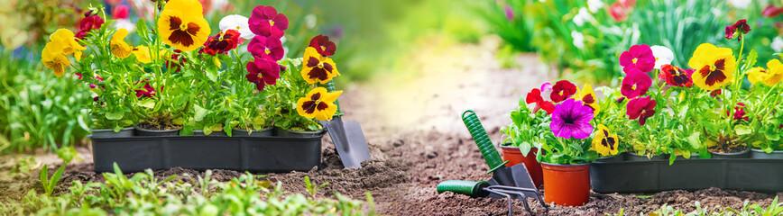 Planting a flower garden, spring summer. Selective focus.